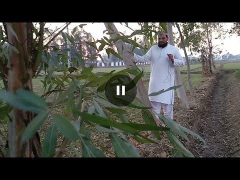 My Eucalyptus ( safaiday )  trees experience