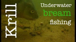 Bream fishing with Krillers - Underwater fishing - Breamtime S4 E2