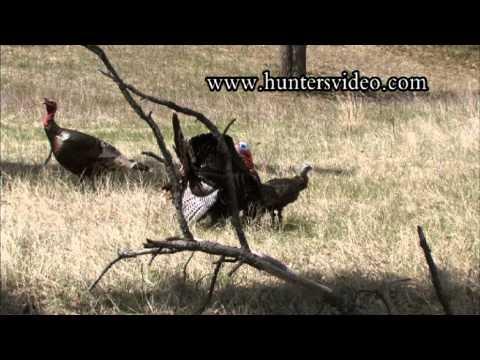 Hunting Turkey - Hunters Video