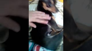 Мини рассказ о собаке