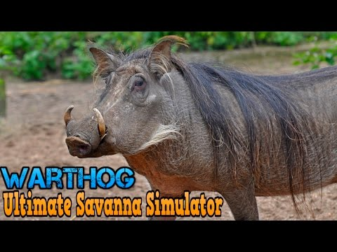 Ultimate Savanna Simulator #Warthog By Gluten Free Games Action & Adventure iTunes/Android