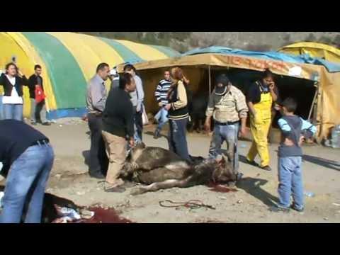 Kurban Kesimi KKB. slaughtering. Feast of sacrifice in Turkey. Ankara women and girls