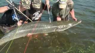 Relentless Pursuit Arrow Camera - Giant 225 Lb Gator Gar Bow Fishing