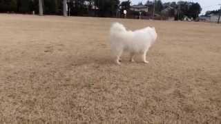 撮影日2015年1月14日 アライ畜犬牧場 http://www.araichikuken.com.