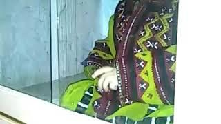 Funny Cute Baby///Cute Baby Hadiqa Zanaib