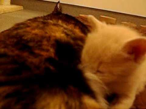 Extreme kitten cuteness, vol. 5: Dinner