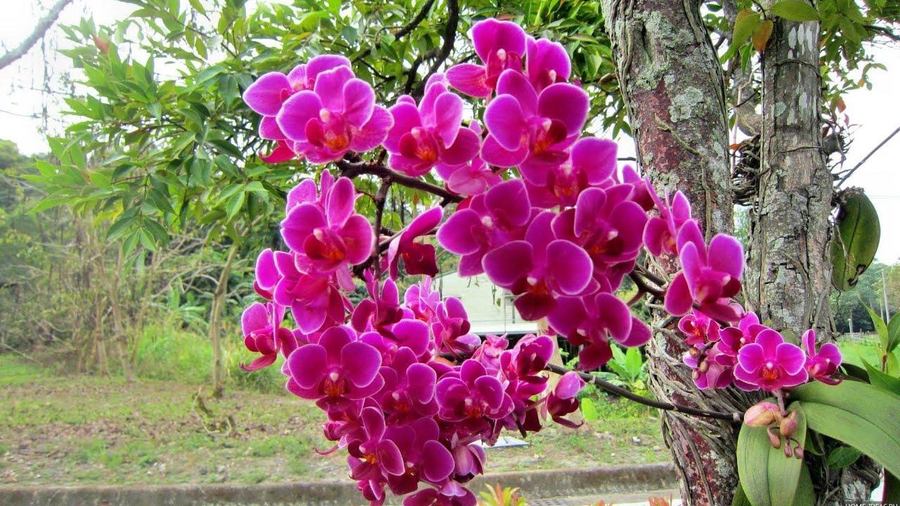 Орхидеи как растут в природе видео