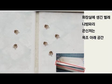 화장실-나방파리-없애는-방법- -화장실-벌레- -화장실-욕조-나방파리-은신처-how-to-get-rid-of-drain-flies- -how-to-remove-moth-flies