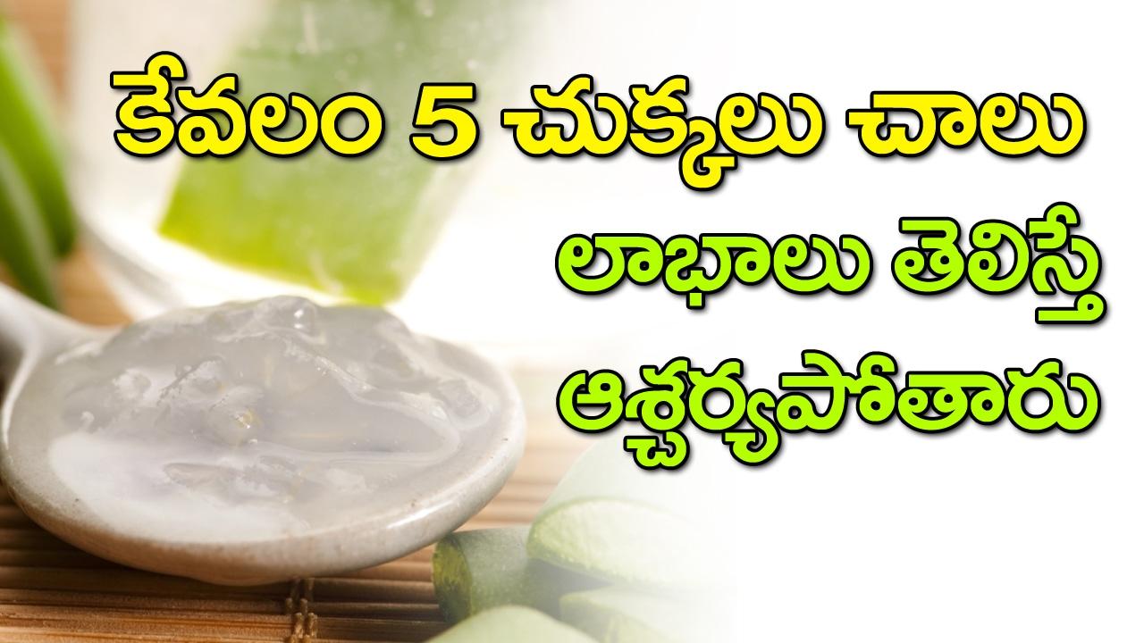 Amazing Benefits Of Aloe Vera Best Health Tips In Telugu Home Remedies Vtube Telugu