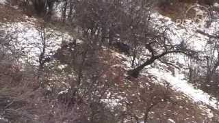 Охота на кабана в Таджикистане видео