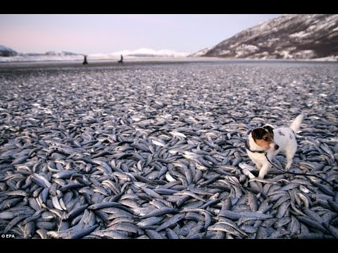 The Last Fish - Our Exhausted Seas - Documentary on Overfishing and Dwindling Fish Stocks