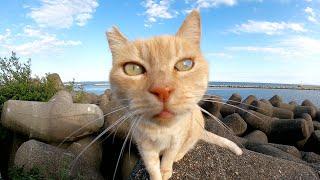 モフれそうで、モフらせてくれない警戒心の強いクリーム猫