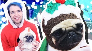 PUGS IN CHRISTMAS OUTFITS!!!