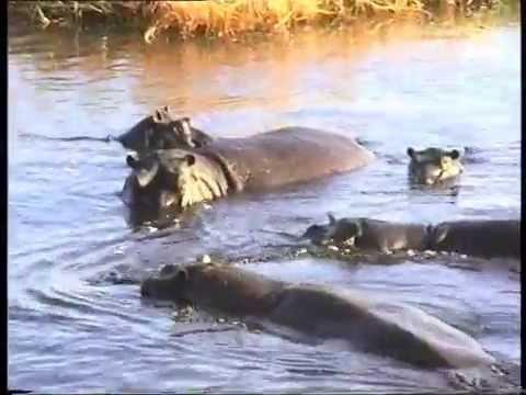 DVD 16 Rejser 2002 COCO Beach, Botswana og  Zimbabwe