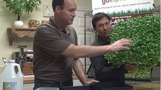 How to Grow Sprouts with Water or in Soil Any Time of the Year at Got Sprouts