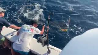 2020 Bisbee's East Cape Offshore | Suerchingo | Striped Marlin