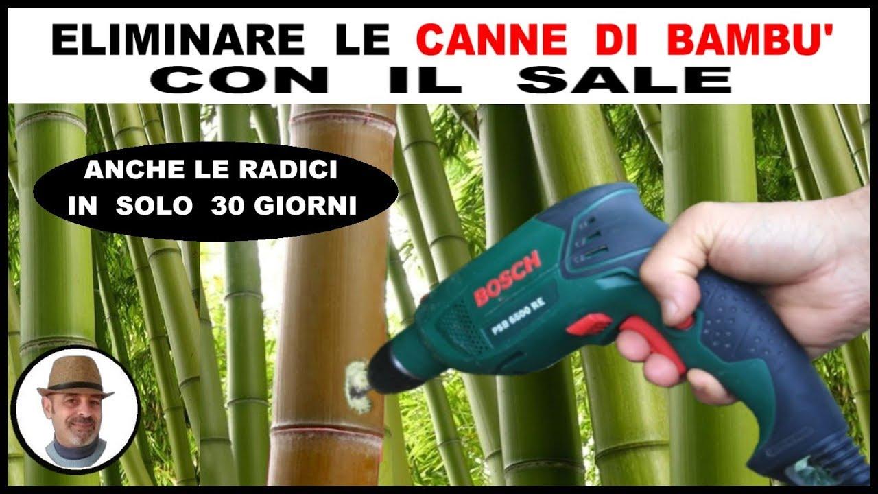 Come Seccare Le Piante seccare le canne di bambu in soli 30 giorni con il sale