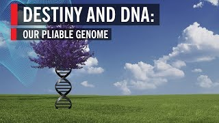 Destiny and DNA: Our Pliable Genome Full Program