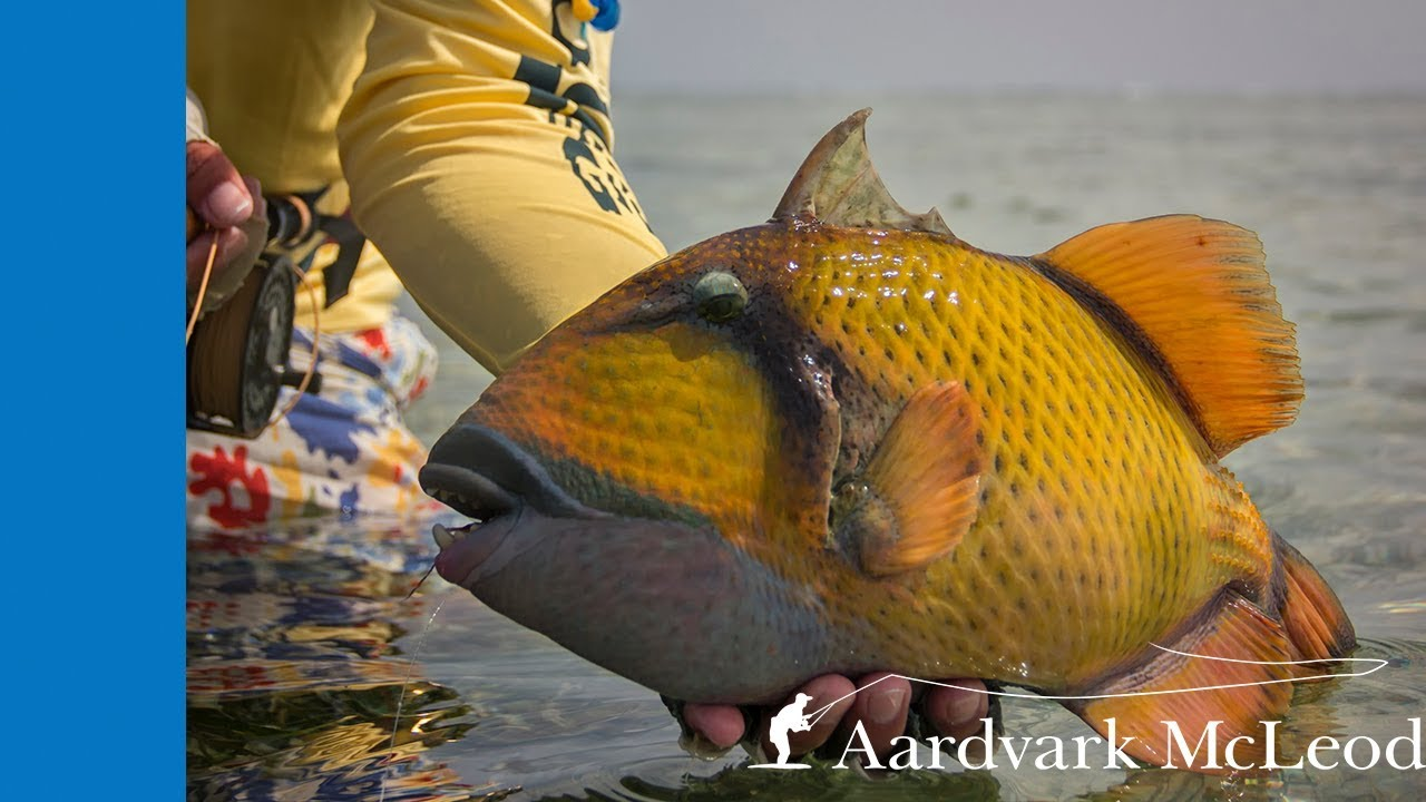 Flat Out Strange - Fly Fishing For Trigger Fish In Sudan