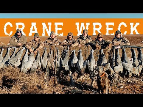 Crane Wreck | Sandhill Crane Hunting With Red Eye Outfitters In Lubbock, Texas