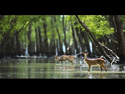 Sundarban Video By Tourism Bengal