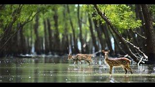 Sundarban Video By Tourism Bengal