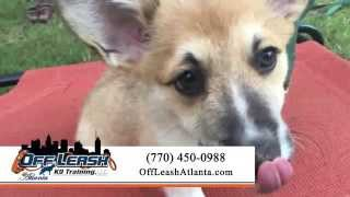 Off Leash K9 Training, Atlanta | Atlanta.offleashdogtrainers.com | Dog Training Atlanta