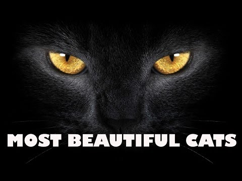 10+ Of The Most Beautiful Cats In The World