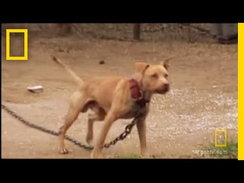 Underground Dogfighting | National Geographic