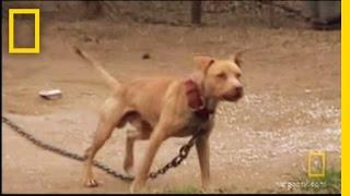 Underground Dogfighting