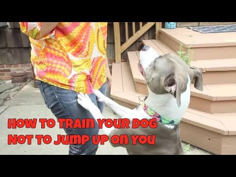 how-to-train-your-dog-not-to-jump-up-on-you---get-free-dog-training