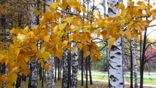 Что это за листья