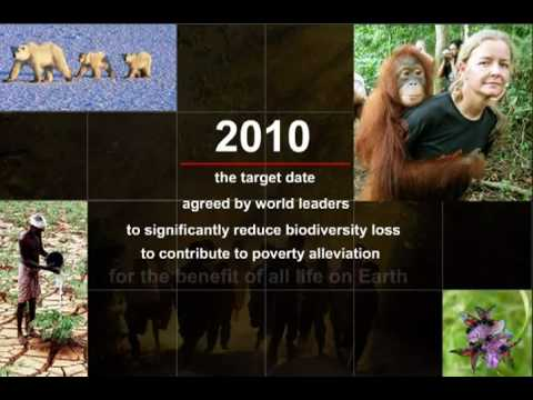 NetworkNewsToday: BIODIVERSITY: ACTION NOW FOR LIFE on EARTH (UNEP) (UN DCPI) (SCBD)