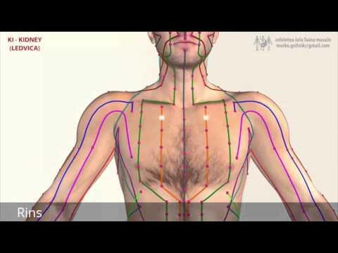 Principais Meridianos do Corpo Humano