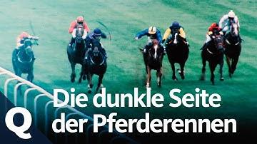 Warum Pferderennen Todesopfer fordert | Quarks