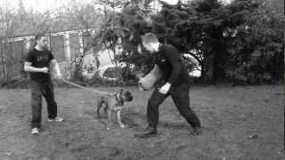 Swatt Dogs K9 Security Training