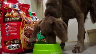犬がドックフードを食うだけの動画.