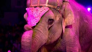 Краткий видеорепортаж - цирковое шоу Инди Ра