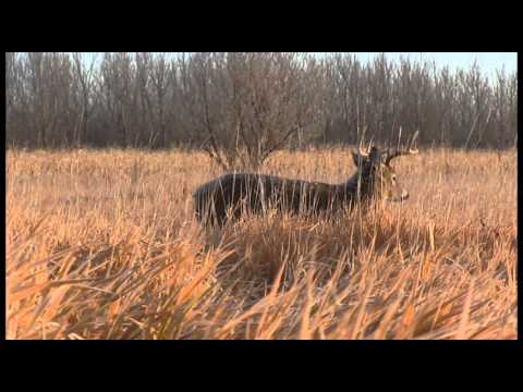 Why You Should Hunt From a Ground Blind - Deer Hunting