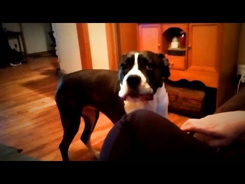 Funniest Pets 😂🐶 Cute Dogs Talking (Part 2) [Funny Pets]