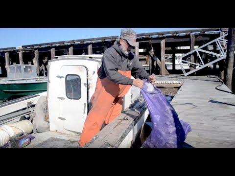 Shellfish Shorts Episode 2: Digging For Dollars