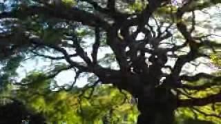 きれいな風景(埼玉県横瀬町)西善寺のコミネカエデ