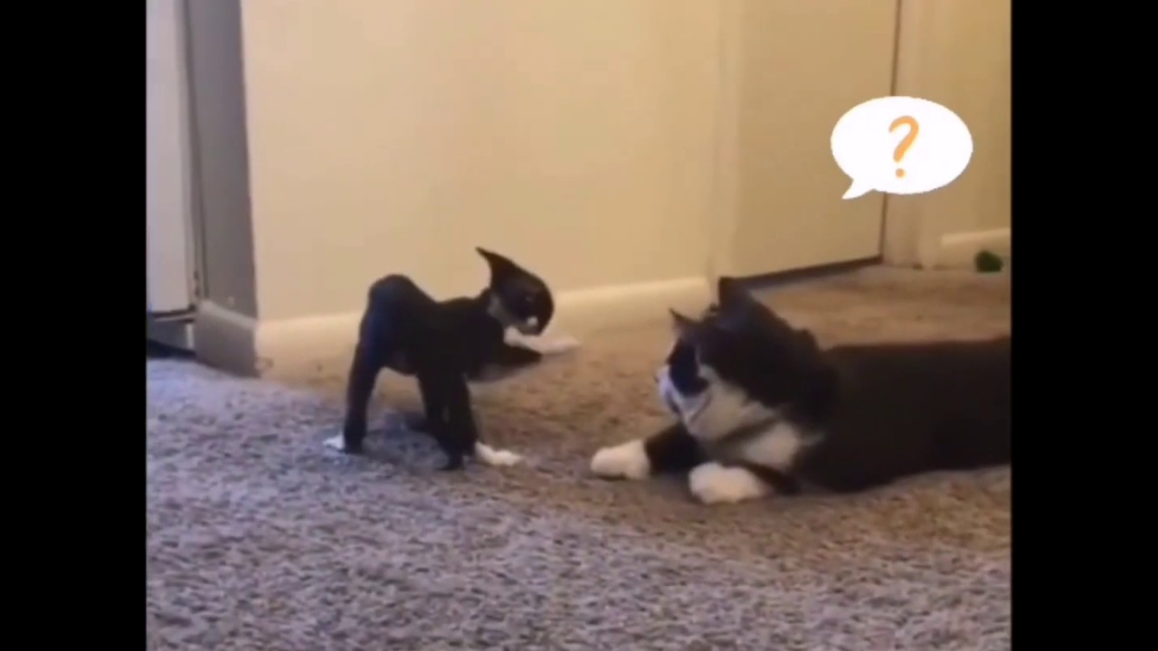 Funny Animale - Some Cats In This Video Will Actually Surprise You
