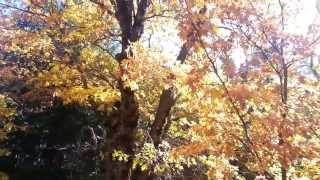 Greenville, California, 95947, Plumas County, USA! Fall Color 2013