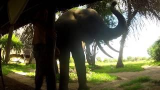 Download Video My elephant friend Laigos MP3 3GP MP4