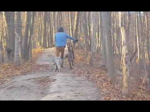 Getting Chased by a Wolf | Downhill Biking