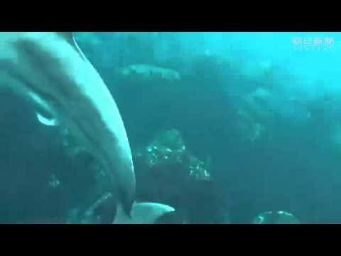 イルカの夢精を撮影 水生の哺乳類では初報告