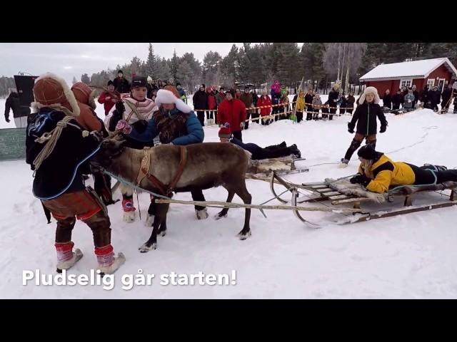 Ren Race på Talvatis søen i Jokkmokk