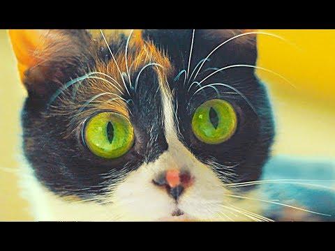 7 лайфхаков которые упрощают жизнь коту