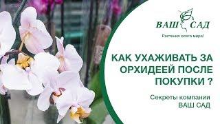 Если это сделать после Покупки, орхидеи зацветут как бешенные. Ваш сад